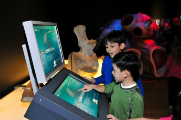 Playing at one of the interactive stations; photo courtesy of AMNH/R. Mickens