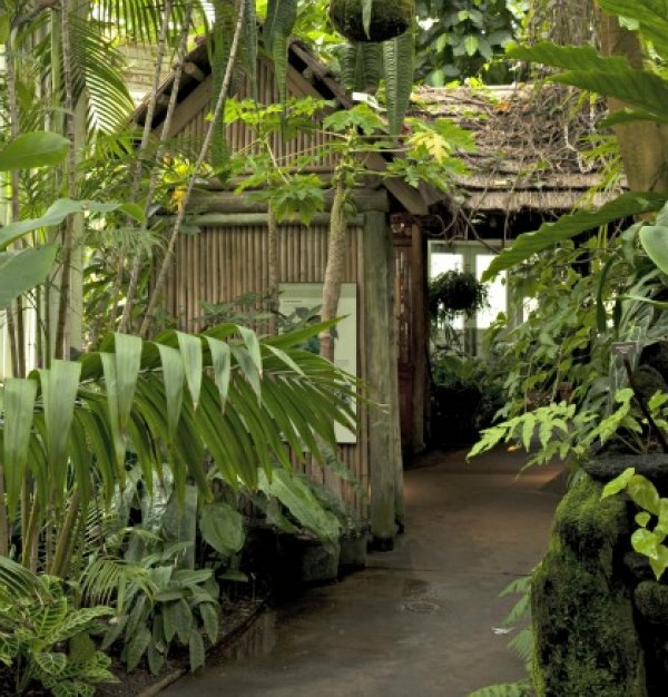 A Tropical Paradise at the New York Botanical Garden; photo: Ivo M. Vermeulen