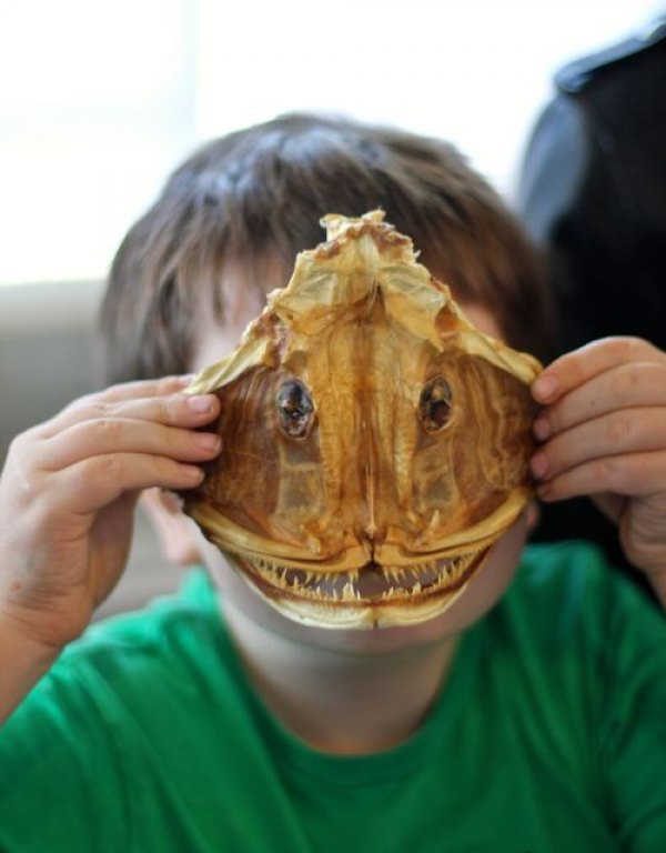 """Learning about the real """"monsters"""" of the deep, like this anglerfish skull"""