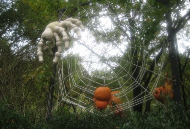 A spooky spider web