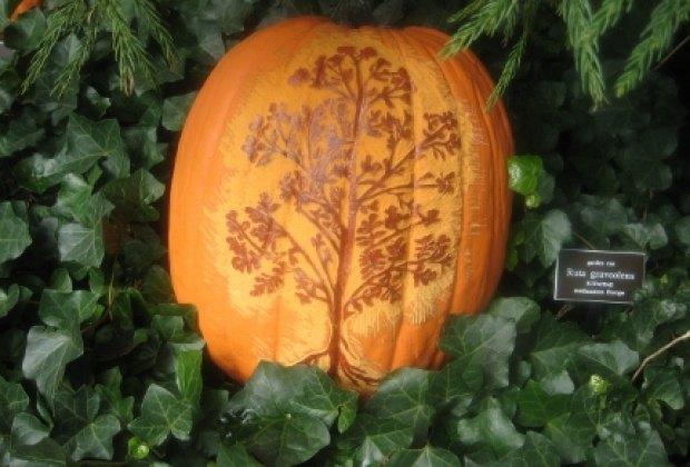 Etched pumpkin