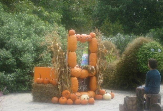 A pumpkin puppet theater