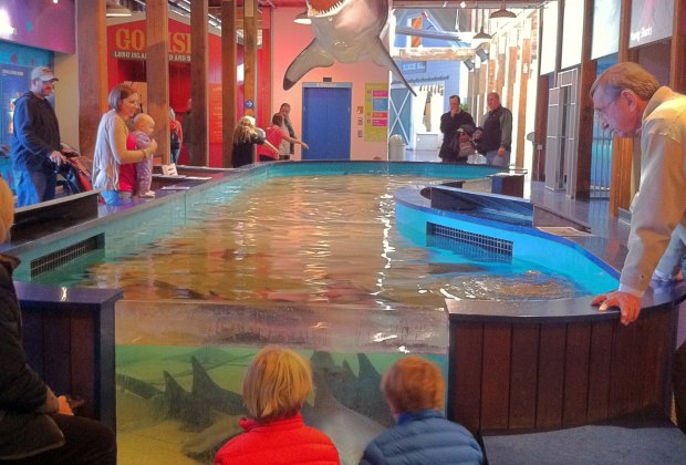 Shark & Ray Touch Pool