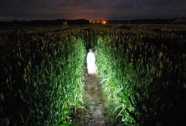Flashlight Corn Maze Long Island